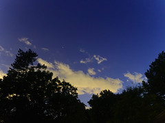 P6229131 (Paul Henegan) Tags: longexposure trees sky night clouds stars availablelight silhouettes moonlight astrometrydotnet:status=failed astrometrydotnet:id=nova1616429