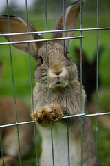 I'm a Rabbit .. Get Me out of Here!!!!! (Andreas Schwind) Tags: rabbit hase lass mich hier raus let me out