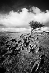 365A5106 (Nazgul 9) Tags: winter bw white black tree wales landscape south scene brecon beacons