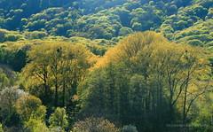 Les v Agatovom udoli, Dubravka (Johan Pipet 2M+ views) Tags: trees nature les forest canon spring europe greenwood sunny valley jar bloom slovensko slovakia palo bratislava acacia bartos stromy dubravka bartoš údolie agatová agát