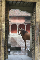 Horse within an enclosed ancient holy courtyard Kathmandu Nepal (eriagn) Tags: wood city travel nepal horse canon eos ancient asia decorative courtyard carving holy kathmandu stonepaving travelphotography supershot eriagn ngairelawson