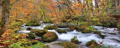 Oirase005 (vincemarion) Tags: red fall nature japan forest automne river landscape rouge waterfall maple riviere autumnleaves momiji trail aomori paysage japon feuille koyo towada erable couleurautomnale