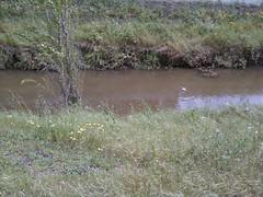 What's up, duck butt? (Ealasaid) Tags: creek walk permanentecreek