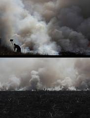 FOTO: PAULO ROSSI (paulo_rossi_foto) Tags: campo paulo fogo incendio mata rossi fumaa queimada devastao