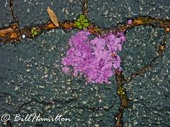 Chalk 3 (editvue) Tags: abstract texture chalk purple stlouis missouri