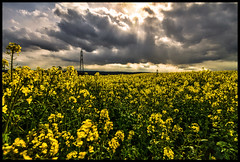 Sustainable... (EosKid) Tags: county light sky plants storm clouds rural countryside energy power durham farming crop electricity pylons beams sustainable rapeseed peterfenech eoskid