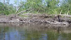 109_2066 - Copy (Dave Garvin) Tags: trip river canoe damage tornado huron