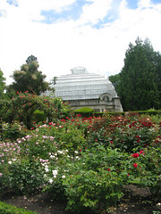 Central Rose Garden - Hagley Park