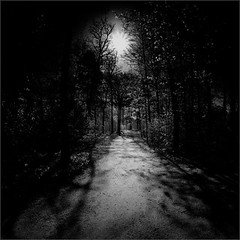 Walking the Ghost (Olli Keklinen) Tags: bw forest photoshop suomi finland dark square helsinki woods nikon scenery path 2012 treest 500x500 toukola ok6 d700 ollik sdarkness 20120517