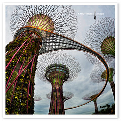 Gardens by the Bay - The Supertrees (TOONMAN_blchin) Tags: singapore marinabay gardensbythebay toonman mygearandme mygearandmepremium mygearandmebronze mygearandmesilver mygearandmegold dblringexcellence thesupertrees