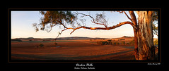 Dookie Hills (Andrew Fleming Photography) Tags: sunrise australia andrew victoria hills dookie fleming mountmajor andrewfleming goulburnvalley centralvictoria greatershepparton