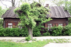 wooden building with a tree (porrectus) Tags: wood trees windows house building tree window architecture clouds canon town wooden europe decoration poland powershot shutter block minsk acernegundo mazowiecki a1200 klonjesionolistny andriolli kazikowskiego