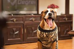 Nina! (Vinicius_Ldna) Tags: dog canon 50mm cachorro boxer nina vinicius t3i ldna