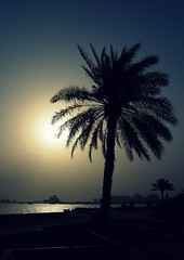 Sunrise in Doha (keithmaguire ) Tags: morning light sun tree water sunshine port sunrise asian dawn asia gulf sunny palm east middle doha qatar catar  katar    qatari      dauha   addawa mygearandme mygearandmepremium mygearandmebronze mygearandmesilver   dblringexcellence   dauh