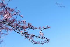 Springer Is Coming ! (Wikalia) Tags: flowers water fleur alpes river eau violet rhne rivire bleu reflet ciel arbres pont loire printemps ville fort fleuve feurs
