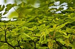Green textures (Tony Shertila) Tags: england church monument leaves death europe dof britain celticcross wirral merseyside portsunlight endofflickr deathofflickr badbadpanda