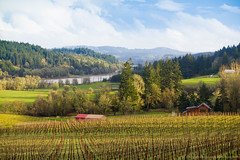 The picturesque Willamette Valley (McKristen) Tags: travel nature oregon landscape vineyard spring wine postcard scenic winery grapes pacificnorthwest dreamy idyllic gaston nationalgeographic naturephotography pacificnw willamettevalley canonef50mmf14 landscapephotography postcardperfect beaconhillwinery canoneosrebelt2i mckristen kristenmccormickphotography mckristenphotography