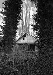 Nature crowding in (lydiafairy) Tags: old blackandwhite bw abandoned monochrome rural decay country oldhouse abandonedhouse abandonment urbex oncewashome