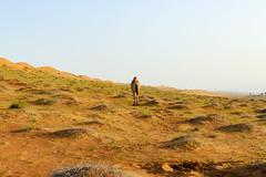 P1770366.jpg (brianduncan) Tags: desert oman camels