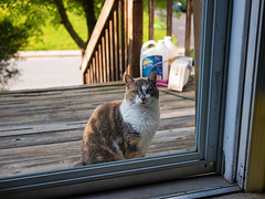 Outside Looking In (Eoghann Irving) Tags: composition cat lens