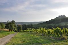 Weinviertel Niederosterreich Falkenstein DSC_0558A (reinhard_srb) Tags: berg wiese wolken ruine grn baum niedersterreich falkenstein burg trauben rebe weinviertel weingarten sonneschein