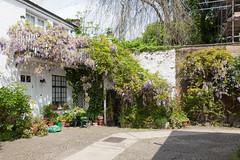 Mews (SReed99342) Tags: uk england london mews wisteria stjohnswood