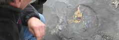 History of Ammolite (The Ammolite) Tags: rock fossil minerals mineral ammonite gemstone ammolite