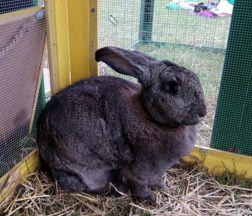 #rabbits #bunny #bunnies