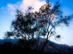 IMG_6842 (Rick Byrnes) Tags: sunrise westtexas bigbendnationalpark chisos chisosbasin chisosmountains