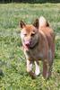 16-05-15_untitled_181 (Daniel.Lange) Tags: dog philadelphia dogs dogdayafternoon spado columbussquarepark