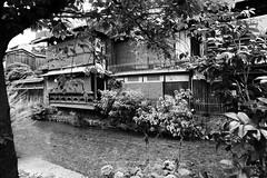 Gion-shirakawa-no5 (captain) Tags: kyoto gion shirakawa