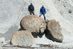 "Gary and Bill standing on giant ""hamburger buns"" (cocoi_m) Tags: california cliff nature stone standing giant bill sandstone strata gary lowtide geology geomorphology bowlingballbeach concretion mendocinocounty mudstone cemented hamburgerbuns schoonergulchbeach steeplydipping earlymiocene"