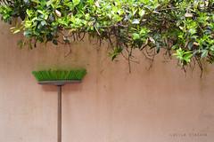 (Lucila Viacava) Tags: naturaleza arbol ventana escoba hoojas