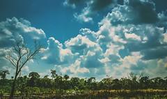 IMG_9354 (caBzPeru) Tags: sky naturaleza peru nature colors clouds canon landscape photo selva paisaje perú 55mm jungle cielo nubes pe iberia puertomaldonado madrededios floresyplantas faunayflora igers igersperu peruestrella ruteandoperu