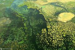 15-09-20 Ruta Okavango Botswana (67) R01 (Nikobo3) Tags: travel parque paisajes naturaleza color canon ngc delta unesco viajes botswana okavango vuelo twop frica vidasalvaje g7x omot deltadelokavango flickrtravelaward canong7x nikobo josgarcacobo todosloscomentarios