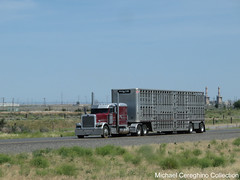 Prime Time Express Peterbilt 389, Truck #74 (Michael Cereghino (Avsfan118)) Tags: prime time express llc peterbilt 389 pete model sleeper trucking livestock bullwagon cattle truck trailer semi spread axle