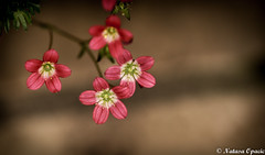 Make Sure The Person You're Willing To Take A Bullet For Isn't The One Behind The Gun (_Natasa_) Tags: flowers pinkflowers pink closeup macro dof depthoffield bokeh detail love natasaopacic natasaopacicphotography canon canoneos7d canonef100mmf28lmacroisusm nature art
