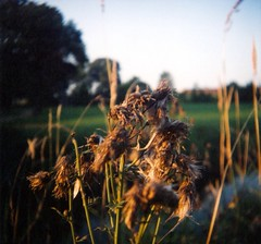 Blowing in the Wind (mfellsman) Tags: color nature analog wideangle 120film diana closeuplens 55mmlens