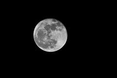 Lune (Angad Singh   Zone 5 Aviation) Tags: sky moon india night canon 14 luna lodge crescent punjab teleconverter extender canon70200f4l 14x kikar 50d ropar canoneos50d canonef70200mmf4lisusm basali