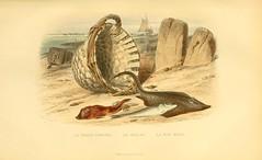 Anglų lietuvių žodynas. Žodis merlangus merlangus reiškia <li>merlangus merlangus</li> lietuviškai.