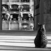 El guardian del cementerio (Vero_85) Tags: blackandwhite blancoynegro cemetery cat cementerio gato canoneos7d canon7d miradafavorita