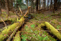 Mossy Fallen Giant (10mmm) Tags: park county new york ny tree water creek forest moss woods stream dale crystal branches roots lewis adirondacks watson stump brook lowville crystalcreek