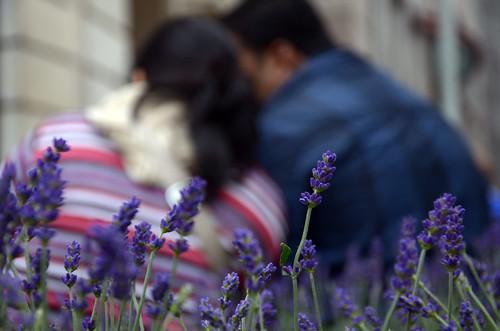 Only the lavender heard it ©  Still ePsiLoN
