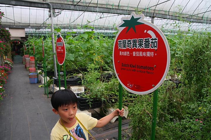 金勇蕃茄休閒農場018