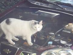 gato mecnico mechanical cat (Jos X) Tags: auto car cat quito ecuador mechanical gato mecanico
