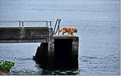 Os estoy viendo... I´m watching... (ironde) Tags: dog rio river spain agua estuary bilbao perro bizkaia getxo ría euskalerria ironde