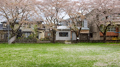 Sakura Park at Omagari Daisen in Spring (SN.04_2012) (Moonie's World) Tags: japan spring  sakura  akita  tohoku hanami  omagari  daisen sakurafestival nolens sakurapark     fotopedia
