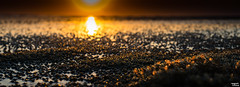 Millions of baby Crabs contemplating the Solar eclipse (Teo Morabito) Tags: sunset sun cute beach nature beautiful closeup landscape outside solar eclipse natural outdoor crab tiny crabs magical eclips billions teomorabito