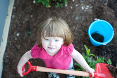 May 24, 2012_12 (Kim_Reimer) Tags: pink baby playing canada color cute girl childhood shirt garden fun outside outdoors kid bucket toddler child bc gardening digging britishcolumbia blueeyes joy daughter adorable happiness canadian redhead dirt innocence northamerica shovel cheerful carefree babyhood gettyimagescanada