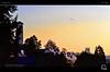 Solar Ascent (tomraven) Tags: morning light church southwales wales sunrise dawn early seagull gull newport soaring fbdg dancinggull tomraven degull aravenimage flickrstruereflection1 q22012